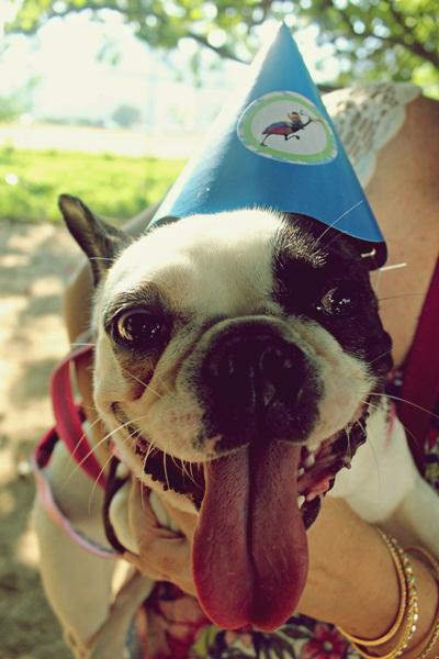 Festa de aniversário home made festa pet Maquiavel Foucault Dépaysement081