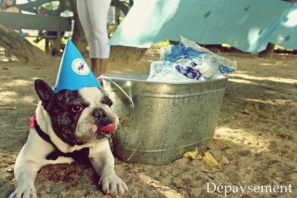 Festa de aniversário home made festa pet Maquiavel Foucault Dépaysement191