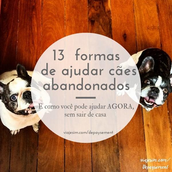 13 formas de ajudar cães abandonados