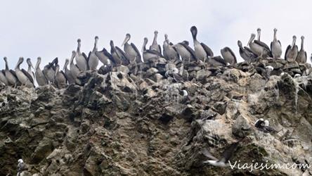 Mochilão Bolívia Peru Paracas Islas Ballestas viajesim 250 px