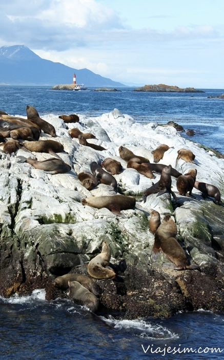Ushuaia Patagônia Argentina Parque Nacional Terra do Fogo Canal de Beagle Glaciar Martial Pinguinera
