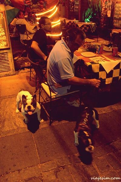 Viagem com cachorro Foucault em Buzios021