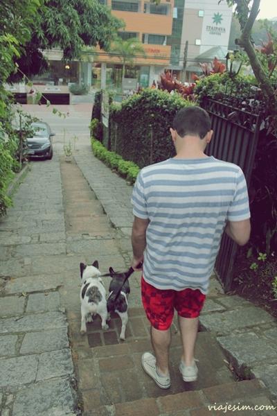 viagem com cachorro petrópolis itaipava serra 351