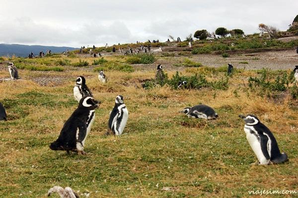 ushuaia argentina o que fazer onde ficar comer quanto custa616