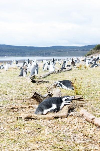 ushuaia argentina o que fazer onde ficar comer quanto custa800