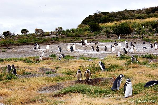 Viagem argentina Ushuaia como ir onde ficar onde comer o que fazer600