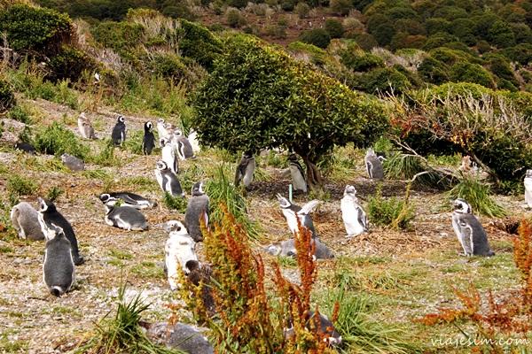 Viagem argentina Ushuaia como ir onde ficar onde comer o que fazer654