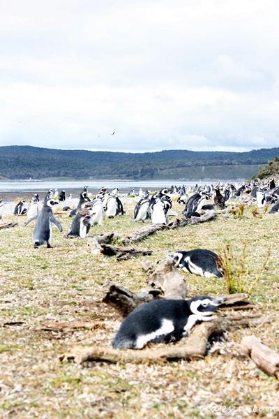Viagem argentina Ushuaia como ir onde ficar onde comer o que fazer799