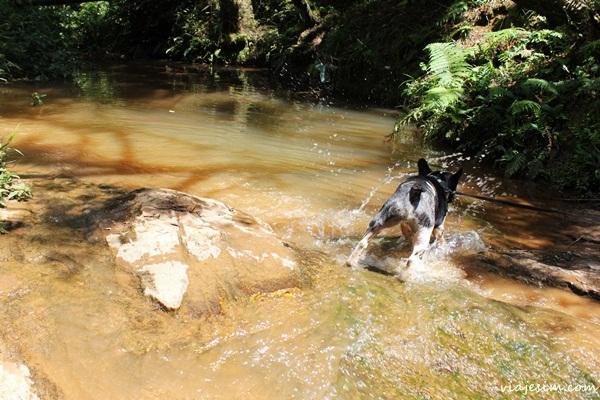 Viagem com cachorro pet friendly Monte Verde Minas Gerais669