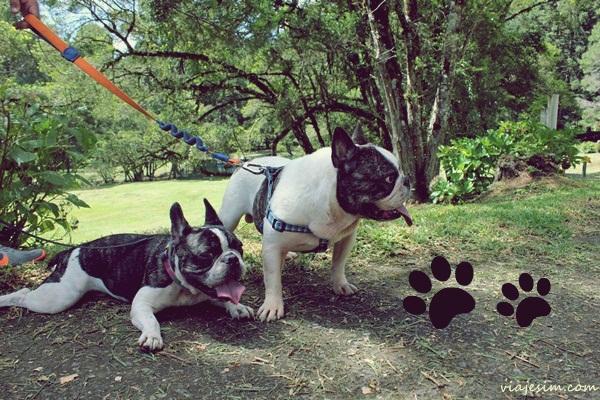 Viagem com cachorro pet friendly Monte Verde Minas Gerais008