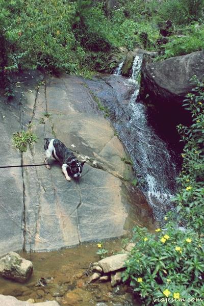 Viagem com cachorro pet friendly Monte Verde Minas Gerais022