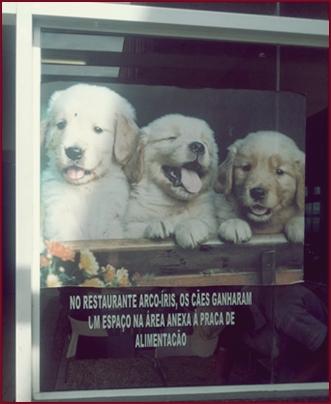 viagem com cachorro via dutra