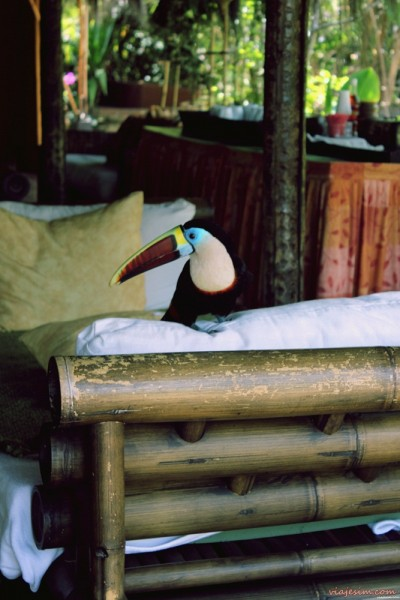 Salto Angel Venezuela Canaima Up Acampamento Wakú Lodge