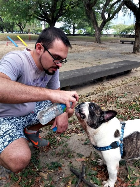 Passeio com cachorro Rio Parque Carmem Miranda Flamengo