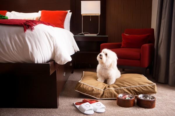dica do booking para viagens com cachorro hotéis que aceitam cachorro
