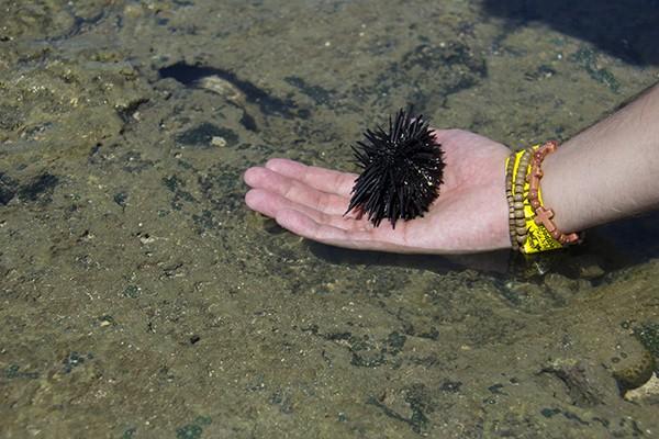5 Passeios imperdíveis em Porto de Galinhas Jangada nas piscinas naturais