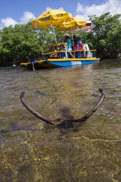 Dicas práticas para sua viagem a Porto de Galinhas Jangada no rio Maracaípe - jangada ancorada