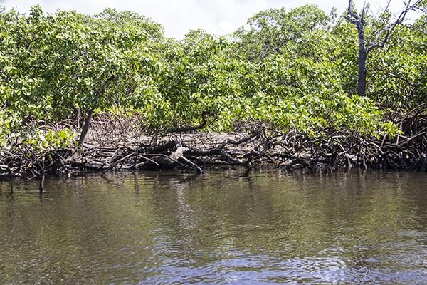 5 Passeios imperdíveis em Porto de Galinhas Jangada no rio Maracaípe -