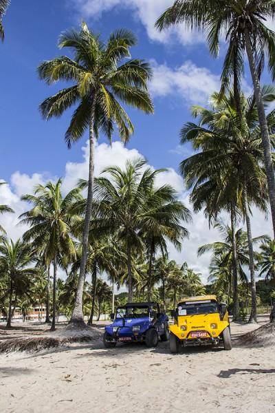5 Passeios imperdíveis em Porto de Galinhas Passeio de Buggy - buggy e palmeiras